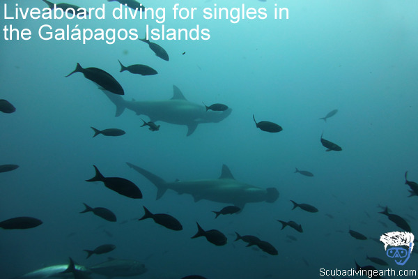 Liveaboard diving for singles in the Galápagos Islands