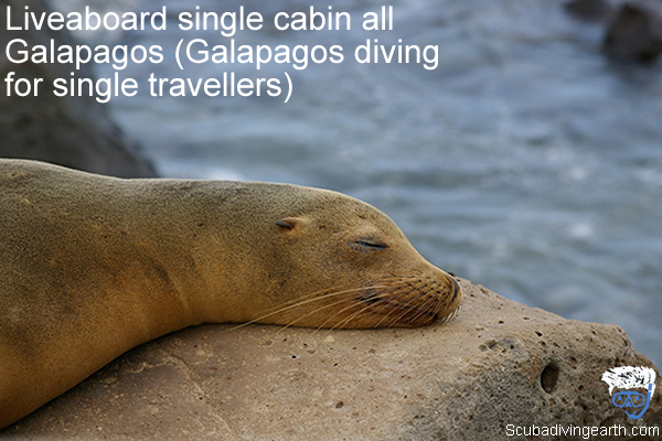 Liveaboard single cabin all Galapagos - Galapagos diving for single travellers and solo divers