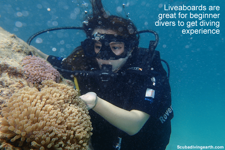 Liveaboards are great for beginner divers to get diving experience