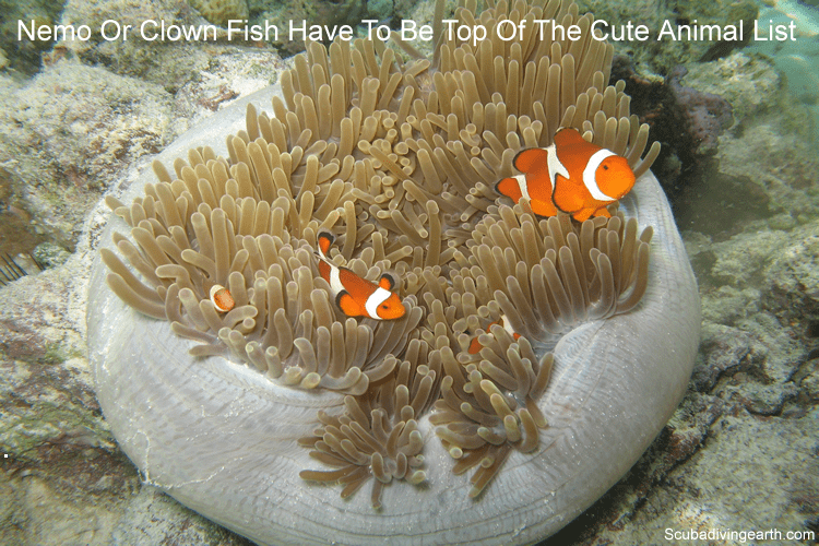 Nemo or clown fish have to be top of the cute animal list