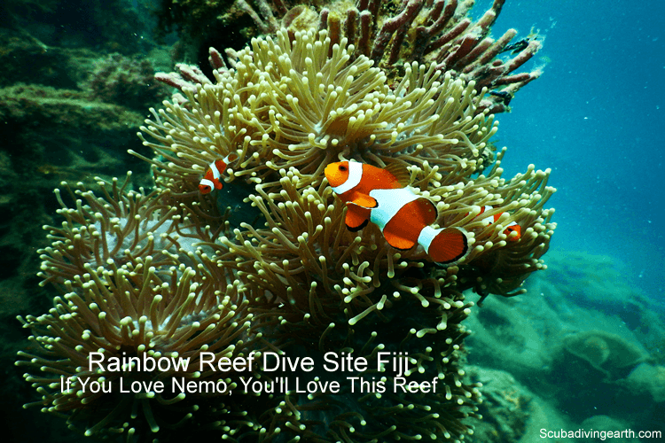 Rainbow Reef Dive Site Fiji - Best Scuba Diving Locations In Fiji