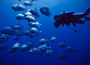 Red Sea Diving Safari: Experience The Red Sea By Liveaboard