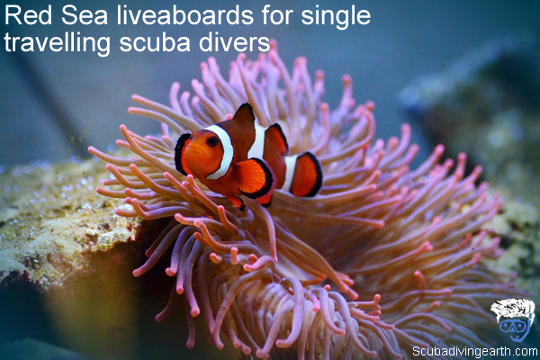 Red Sea liveaboards for single travelling scuba divers