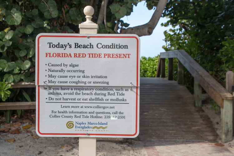 Red Tide Florida - The Affects on Swimmers Divers + Snorkelers