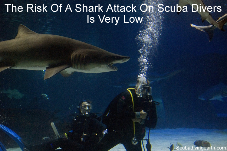 Risk of scuba divers being attacked by sharks or other sea creatures