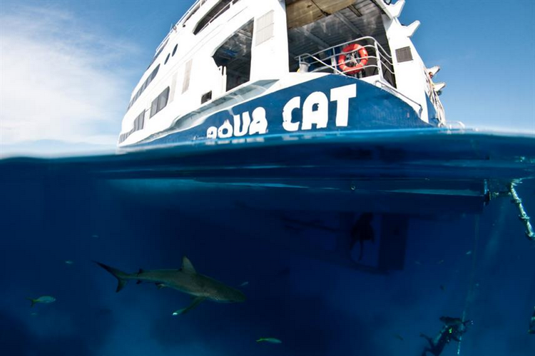 Scuba Diving Experience By Caribbean Island