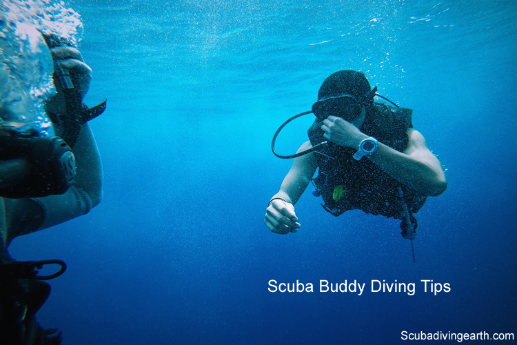 Scuba buddy diving tips for beginners large