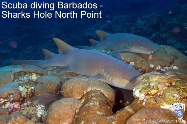 Scuba diving Barbados - Sharks Hole North Point