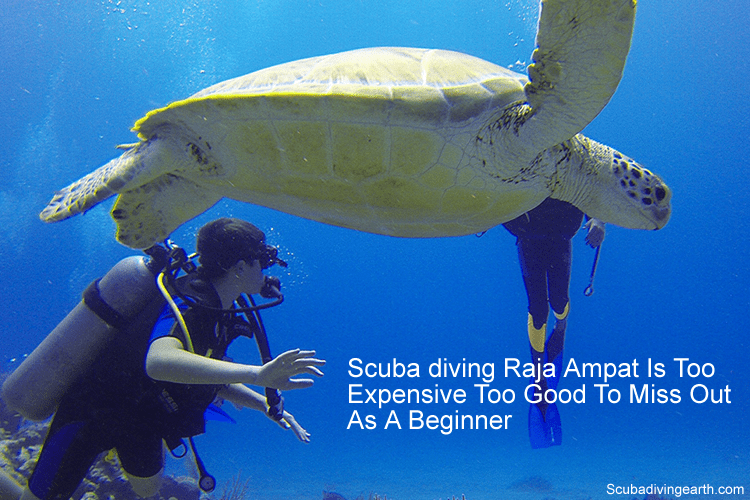 Scuba diving Raja Ampat is too expensive too good to miss out as a beginner