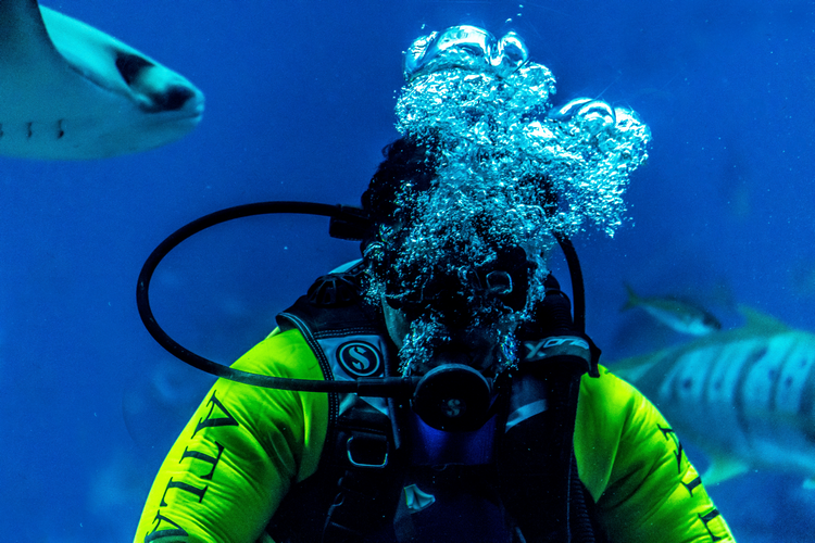 Scuba diving basics includes breathing underwater