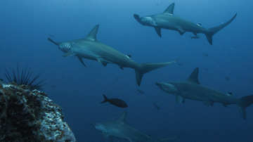 Scuba diving in Cocos Island: The Best Cocos Islands Dive Sites
