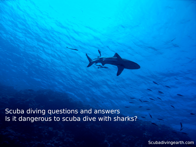 Scuba diving questions and answers - Is it dangerous to scuba dive with sharks