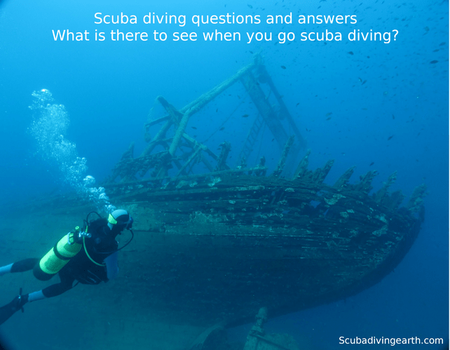 Scuba diving questions and answers - What is there to see when you go scuba diving