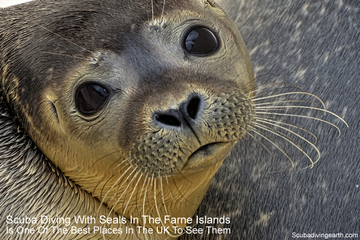 Farne Islands Diving With Seals (Best UK Place To Scuba Dive With Seals)