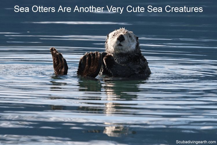 Sea otters are another very cute sea creatures