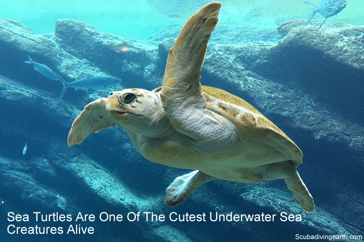 Sea turtles are one of the cutest underwater sea creatures alive