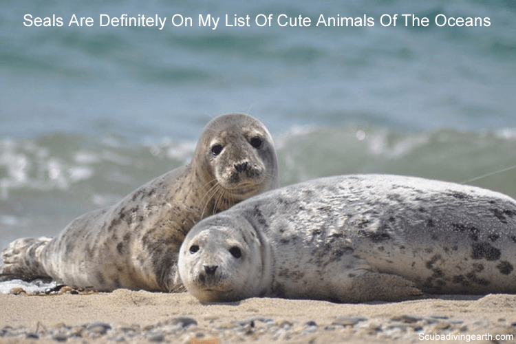 Seals are definitely on my list of cute animals of the oceans