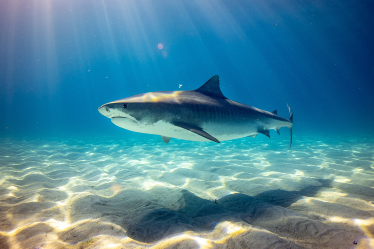 The Bahamas offers the best scuba diving in the Caribbean for beginners