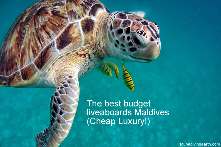 The best budget liveaboards Maldives - Cheap Luxury
