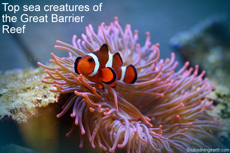 Top sea creatures of the Great Barrier Reef to see from a liveaboard