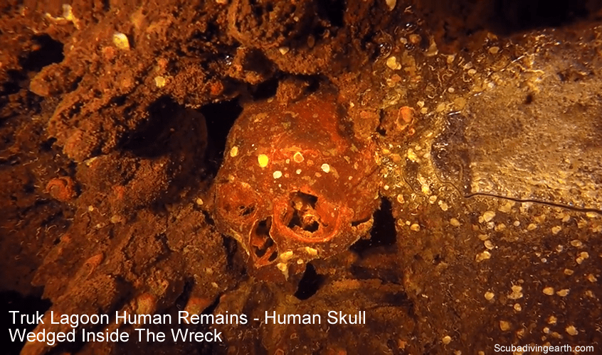 Truk Lagoon Human Remains - Human Skull Wedged Inside The Wreck