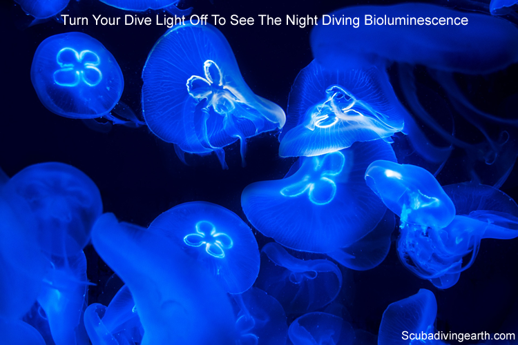 Try turning your dive torch or light off to see thenight diving bioluminescence