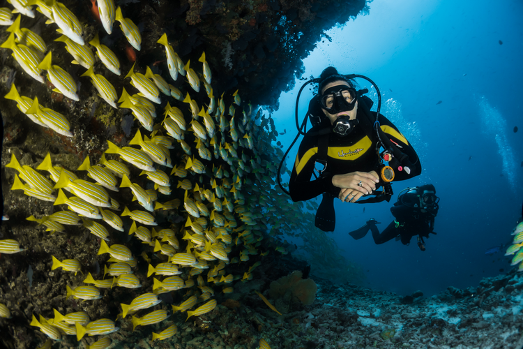What Are The Basics of Scuba Diving For Beginners