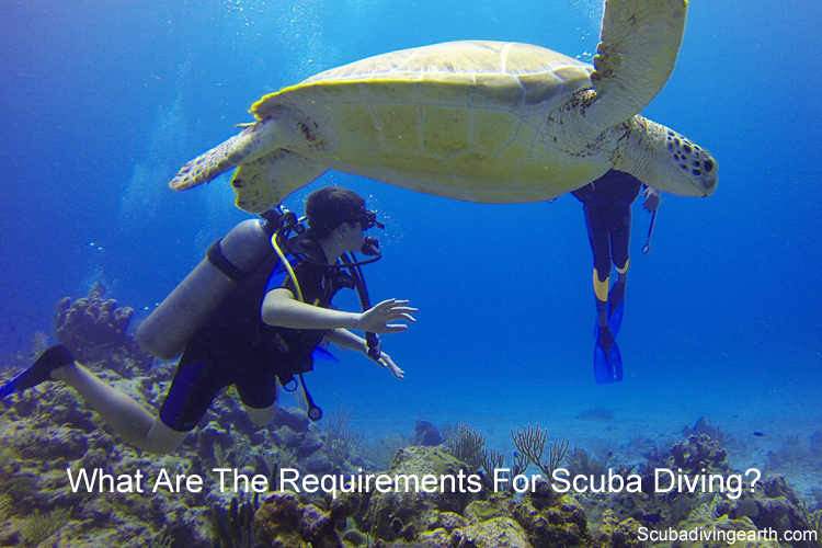 What Are The Requirements For Scuba Diving large