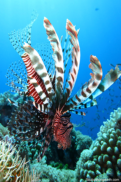 What can I expect to see on the Great Barrier Reef in May