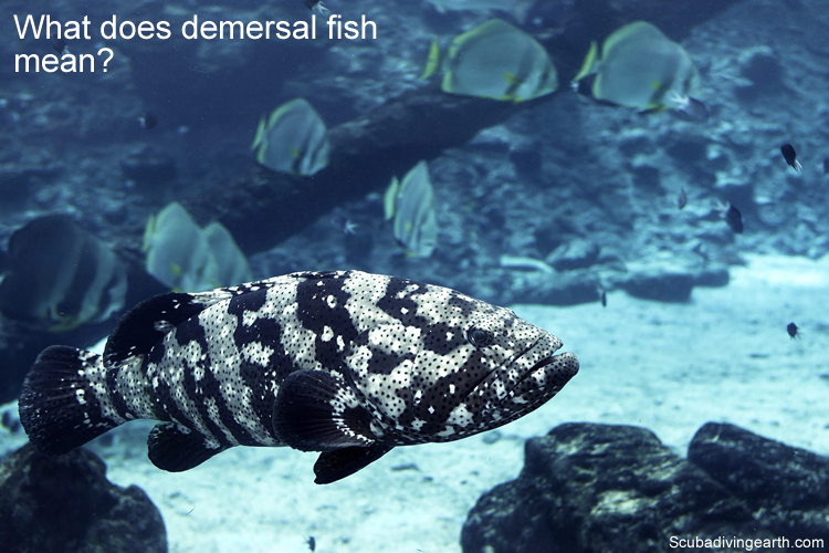 What does demersal fish mean