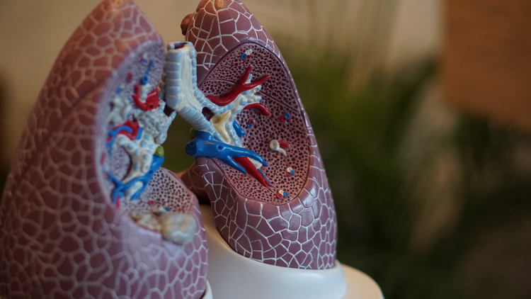What does red tide do to your lungs