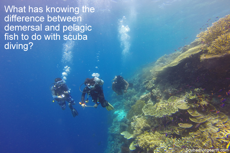 What has knowing the difference between demersal benthic and pelagic fish to do with scuba diving