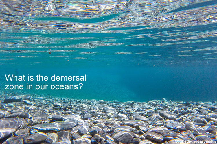 What is the demersal zone in our oceans