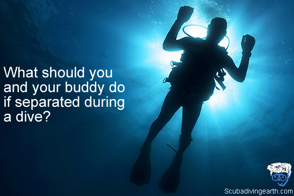 What should you and your buddy do if separated during a dive