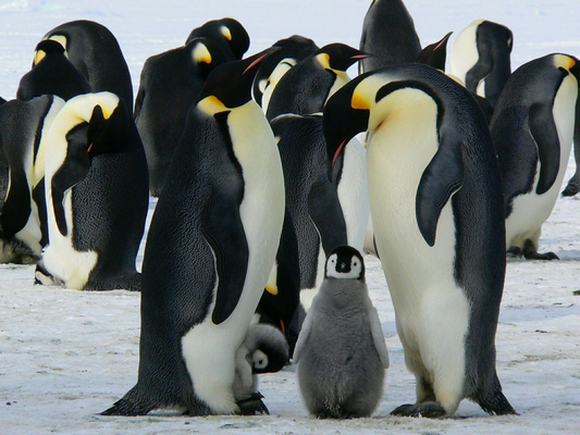 What wildlife can you expect to see scuba diving Antarctica