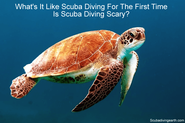 what's it like scuba diving for the first time