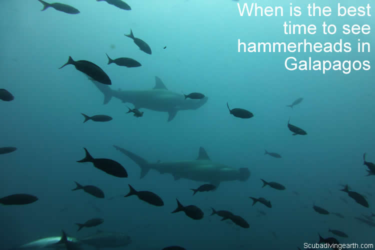 When is the best time to see hammerheads in Galapagos