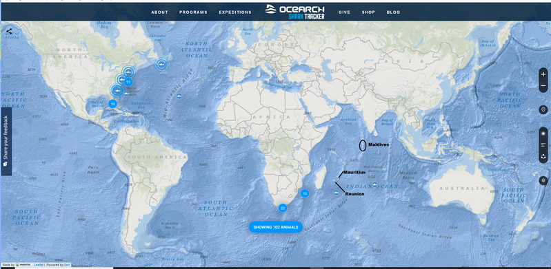 Where Do You Find Great White Sharks