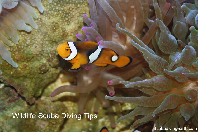 Wildlife scuba diving tips for beginners large