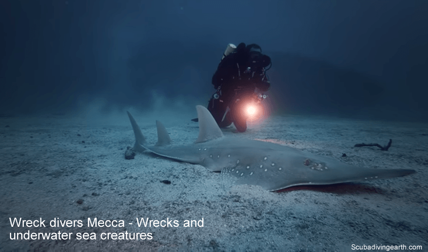 Wreck divers Mecca - Wrecks and underwater sea creatures