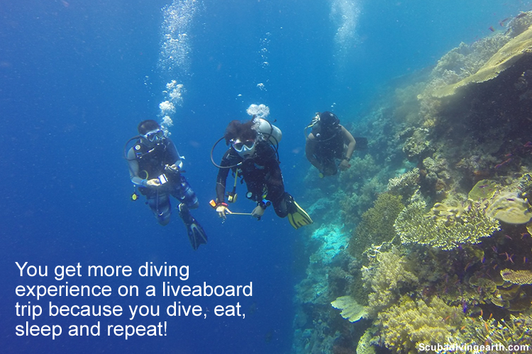 You get more diving experience on a liveaboard diving holiday