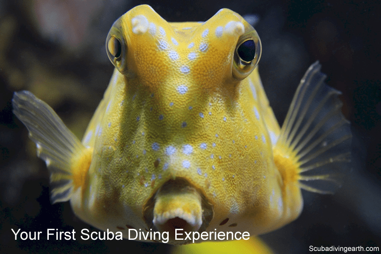 Your first scuba diving experience